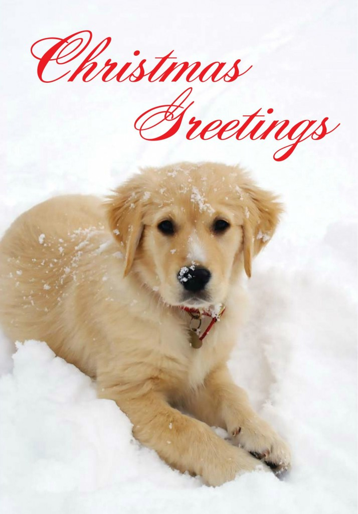 charity christmas cards animal christmas cards - Animal Charity Christmas Cards