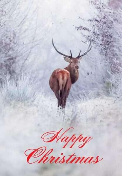 Charity Christmas Cards, Animal Christmas Cards