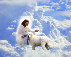 Animals in heaven with Jesus